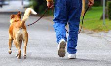 6 Beneficios que caminar le aporta a tu salud