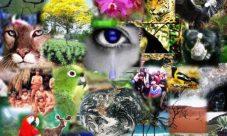 Relación entre diversidad biológica y diversidad cultural